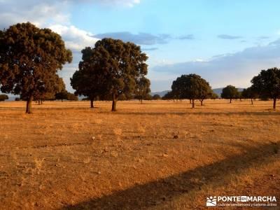 Berrea del Ciervo en Cabañeros y Montes de Toledo en 4x4;rutas a pie por madrid rutas senderismo ce